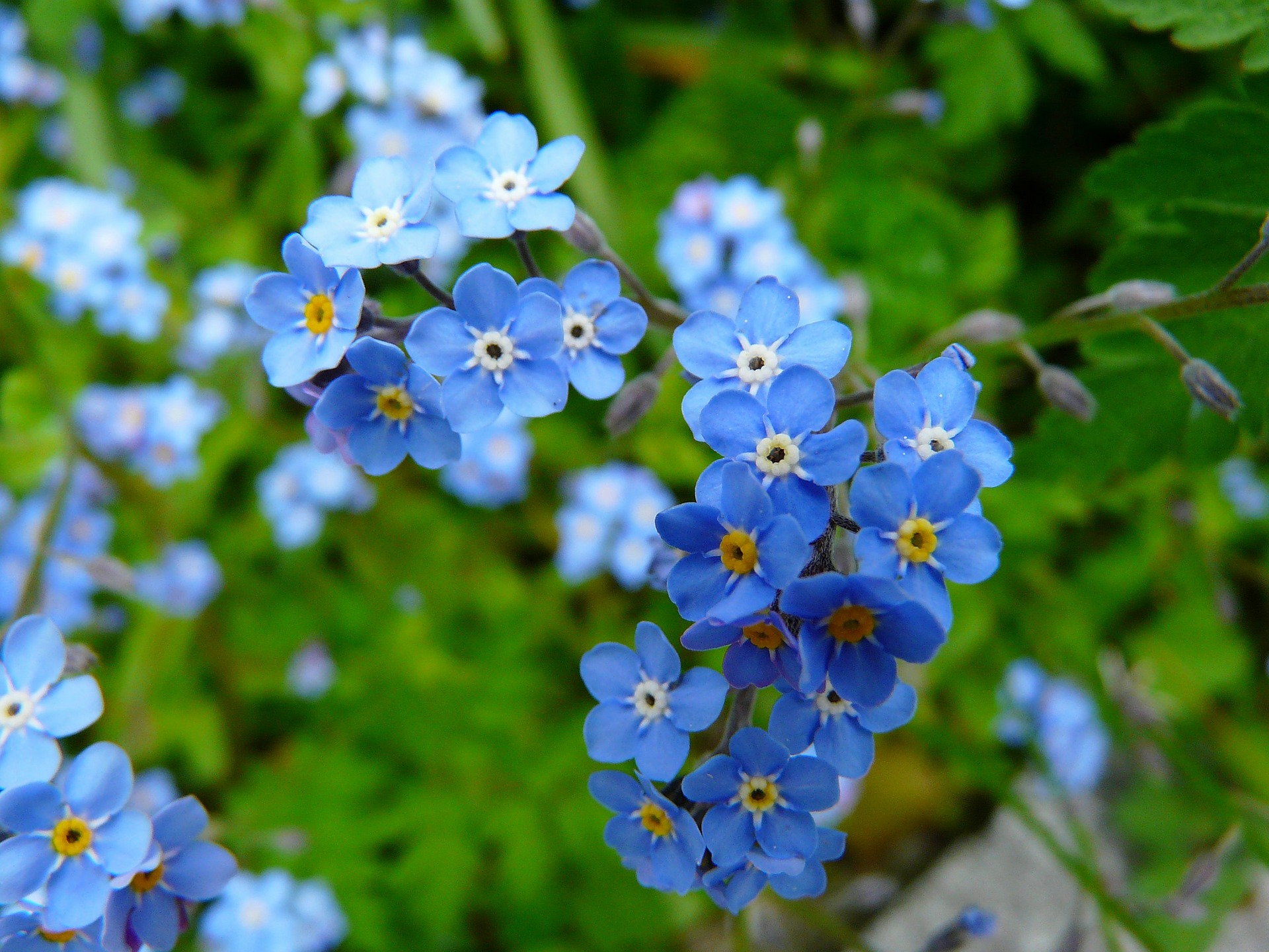 Blue flower representing dreaming of the extraordinary
